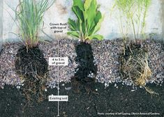 How to plant a low-maintenance gravel garden: With the right plants and planting technique, you can cut weeding and watering to almost nothing! Learn how to grow a low-maintenance gravel garden here.