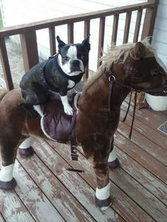 giddy up little doggie!!