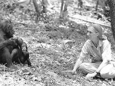 Image result for pictures of jane goodall