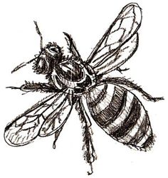 How to draw a bee, step 5
