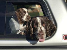 Boys ready for work. http://ift.tt/2qSzjjy