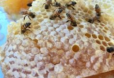 Begin Beekeeping in Arizona here. Find beekeeping resources for how to find bees, beekeeping supplies, and city ordinances. Join the forum too. Fig Leaf Tea, Bee Hive Plans, Beekeeping For Beginners, Arizona Gardening, Bee Supplies, Bee Farm, Backyard Beekeeping, Fig Leaves, Chamomile Tea