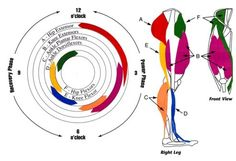 The Anatomy Of A Pedal Stroke