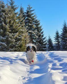 Wanna know how to get the PERFECT off leash dog? Here are my tips!