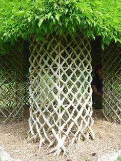Ficus Tree Hut This living tree house demonstrates the potential of training tree trunks into fun and functional garden elements. This is really neat. Dream Garden, Garden Art, Home And Garden, Espalier, Cactus E Suculentas, Living Willow, Living Fence, Fence Art, Garden Shrubs