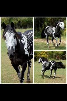 I need a black horse to do this to