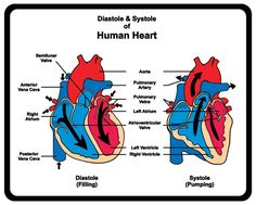 What is the difference between systolic and diastolic blood pressure?
