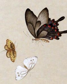 Korean Painting, Chinese Painting, Chinese Art, Painting On Wood, Chinese Butterfly, Butterfly Art, Butterfly Design, Batik Art, Old Art