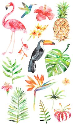Watercolor tropical set by artn'Lera on @creativemarket