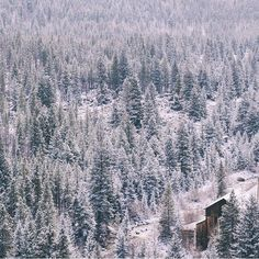 Does snow or fog ever go out of style?   Photo by @victorofvalencia #liveauthentic #livefolk (at folklifestyle.com)
