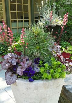 Heuchera, a small Pine, and some blue pansies for a fresh Spring pot