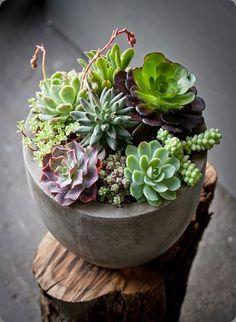succulents Sophie de Lignerolles photo and lila b1604942_10152137904529051_741513737_n