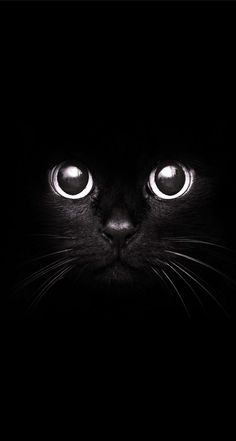 Black Cat photography-art-i-love Beautiful Cats, Animals Beautiful, Cute Animals, Fluffy Animals, Black Animals, Gorgeous Eyes, Amazing Eyes, Simply Beautiful, Crazy Cat Lady