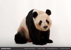 Biodiversity Project - http://www.joelsartore.com/  See how we can help...