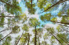 alder-trees-langley-washington-five-color