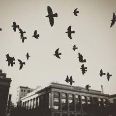 #cinqmars #sfo #birds #vsco