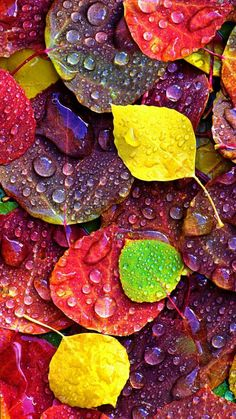 Hintergrundbilder Wallpaper of water drops on leaves Iphone Wallpaper Herbst, Floral Wallpaper Iphone, Fall Wallpaper, Colorful Wallpaper, Wallpaper Backgrounds, Leaves Wallpaper, Beautiful Nature Wallpaper, Beautiful Flowers, Beautiful Pictures