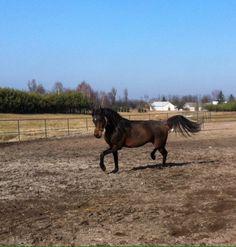 Running, Arabian Horse, Child, Fun