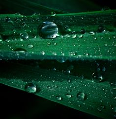 Green Drops by Macro Universe on 500px
