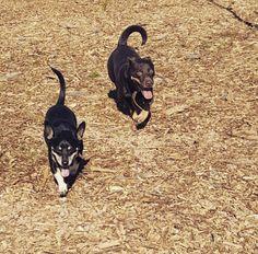 Howard Heuston Dog Park Boulder Co