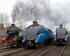Diesel Locomotive, Steam Locomotive, Old Trains, Rolling Stock, Mallard, Steam Engine, East Coast, Amazing Photography, Transportation