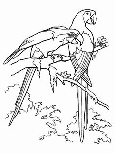 Rainforest birds coloring pages Fish Coloring Page, Bird Coloring Pages, Online Coloring Pages, Free Printable Coloring Pages, Coloring Pages For Kids, Coloring Sheets, Rainforest Birds, Valentines Day Coloring Page, Bird Sketch