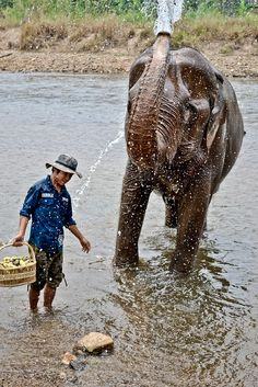 LOOK! An elephant taking a bath! So cute.  [Chiang Mai, Thailand] http://www.spunkygirlmonologues.com/going-extra-mile-traveller/