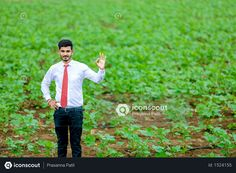 Indian agronomist at cotton field Photo Agriculture Photos, Cotton Fields, Icon Pack, Model Release, Photo Illustration, Vector Free, Photoshop, Animation, Indian