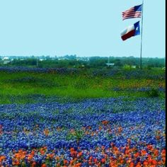 Lone Star State with bluebonnets and Indian paintbrush in the foreground    uploaded by user
