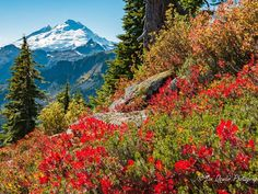 Fall colors take over Mount Baker in Washington.