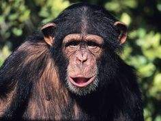 Image result for images of god as a chimp