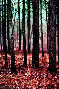 """""""Beyond the Trees"""" by Noelle Visconti"""