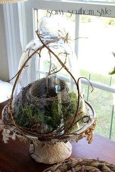 Savvy Southern Style - Cloche Bird Nest with vine Topiary, Bell Jars, The Bell Jar, Bird Nests, Bird Nest Craft, Sun Room, Birdcages, Savvy Southern Style, Southern Style Decor