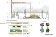 Future Green Studio - Bloom schedule for rooftop plantings