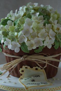 giant cupcake hydrangea blossom plant pot