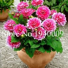 One way to beautify the entrance of your home is to place some flower pots close to the door. Here are several front door flower pots to inspire . Beautiful Flowers Garden, Pretty Flowers, Colorful Flowers, White Flowers, Container Flowers, Container Plants, Container Gardening, Dahlia Flower, Flower Pots