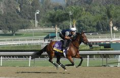 Awesome Feather - lots more photos of Breeders' Cup contenders in the click through!