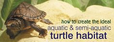 How to Create the Ideal Aquatic and Semi-Aquatic Turtle Habitat