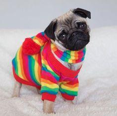 #pug#pugs#cute pug#baby pug#pug puppy#puppy#dog#cute#cutie#aww#selfie#me#summer#hot