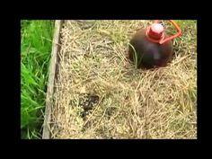 Как бороться с муравьями - YouTube