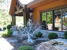 Finally home Twisted Tree, Wire Trees, Art Forms, Bonsai, Outdoor Living, Floral, Nature, Plants, Projects