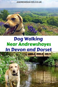 Andrewshayes Holiday Park has some Perfect Beautiful Relaxing East Devon Dog Pet Friendly WALKS for you all to go on. Enjoy the stunning Devon Countryside. Dog Friendly Holidays, Pet Dogs, Pets, Holiday Park, The Other Side, Dog Walking, Dog Friends, Devon, Caravan