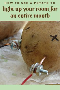 How to Use a Potato to Light Up Your Room for an Entire Month -