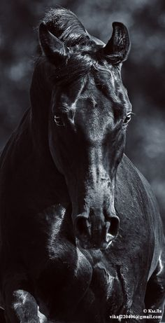 Black Horse.  Celebrate the power and majesty of the horse with horse and Equestrian jewelry at http://www.silveranimals.com/