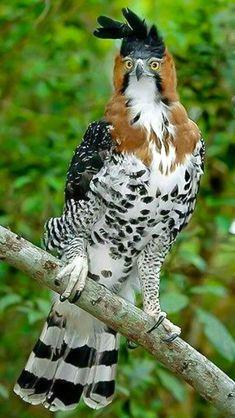 najkrajší orol na svete A selection of bird photos World Birds, All Birds, Birds Of Prey, Love Birds, Pretty Birds, Beautiful Birds, Animals Beautiful, Exotic Birds, Colorful Birds