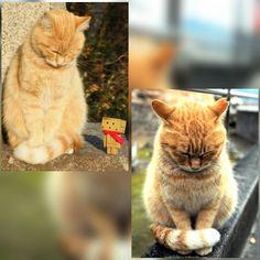尾道で年前に撮ったニャンコにまた会いました(ノ) これはどう見ても同一ニャンコでしょ(ノ) 3年たっても元気で会えたことが嬉しかったです() #猫 #ねこ #ネコ #cat #cat_of_instagram #cat_features #catsofinstagram #catstagram #cats #尾道 #onomichi #onomichigram #ダンボー #ダンボー写真部 #DANBOARD #danbo #instadanbo #igersjapan #igersjp #icu_japan #team_jp_ (尾道#ig_cameras_united #ig_japan #as_archive #猫写真 by yaki0555
