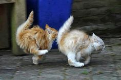Gatti di ogni razza