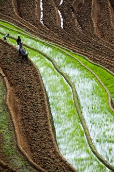 Morning work on rice terraces in Vietnam by Hai Thinh.  - www.flickr.com