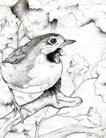 Robin by LadyOrlandoArt