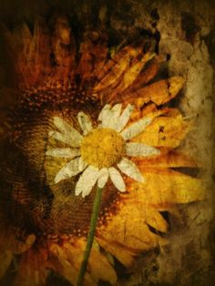 broken daisy and sunflower